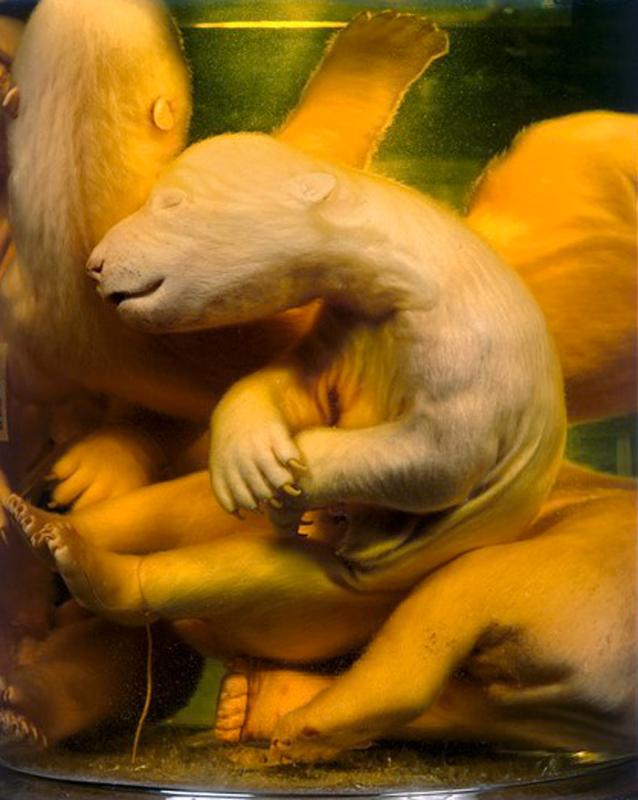©Daniel&Geo Fuchs, Polar Bears from 'Conserved' Series, 1998, Color Print, 2 sizes, Ed.4 each