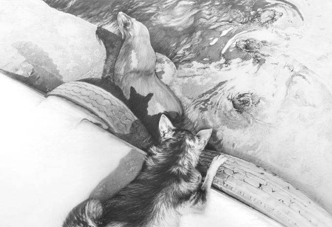 "© Claus-Steffen Braun - 'Dog & Seals' from Cape Town Series, Pencil, 63x90cm, Print 16x24"""